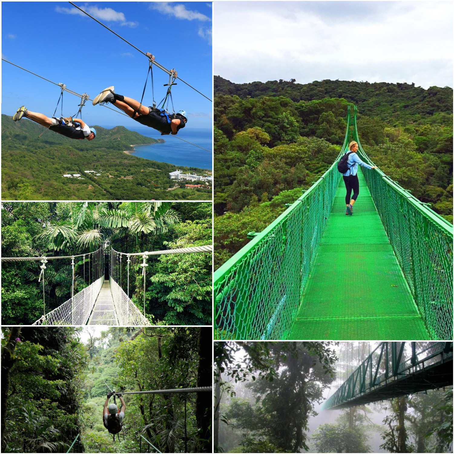 Zip Lining And Hanging Bridges