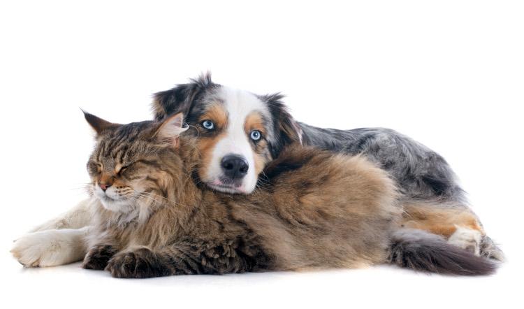 adopt a dog or cat